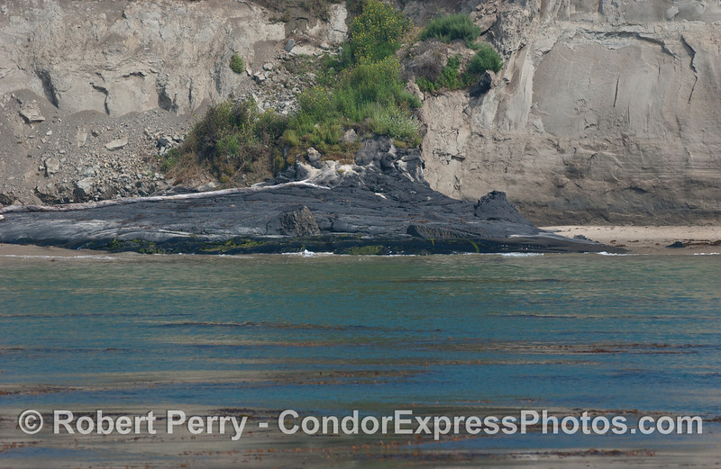 Natural tar seeping along the shoreline near Goleta