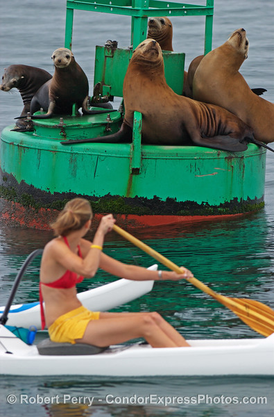 Girl meets sea lions