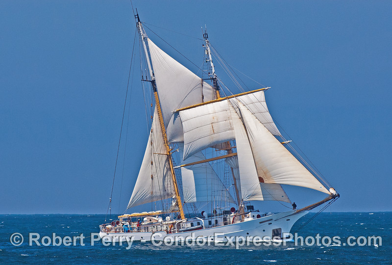 "Tall ship ""Robert C. Seamann"" in a fresh breeze"