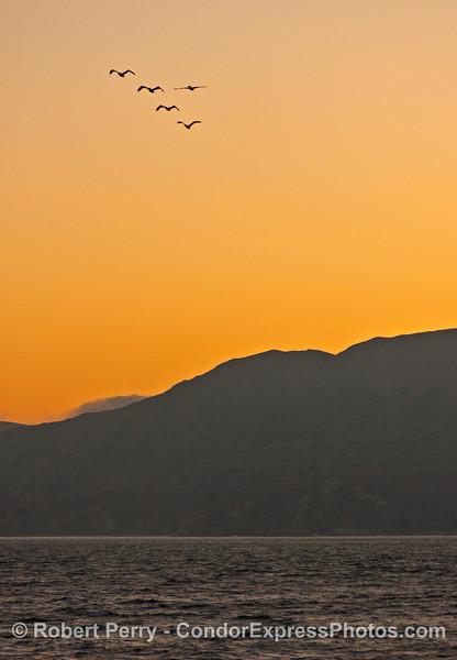 sunset & Pelecanus 2006 09-09 Sta Cruz Isl--032