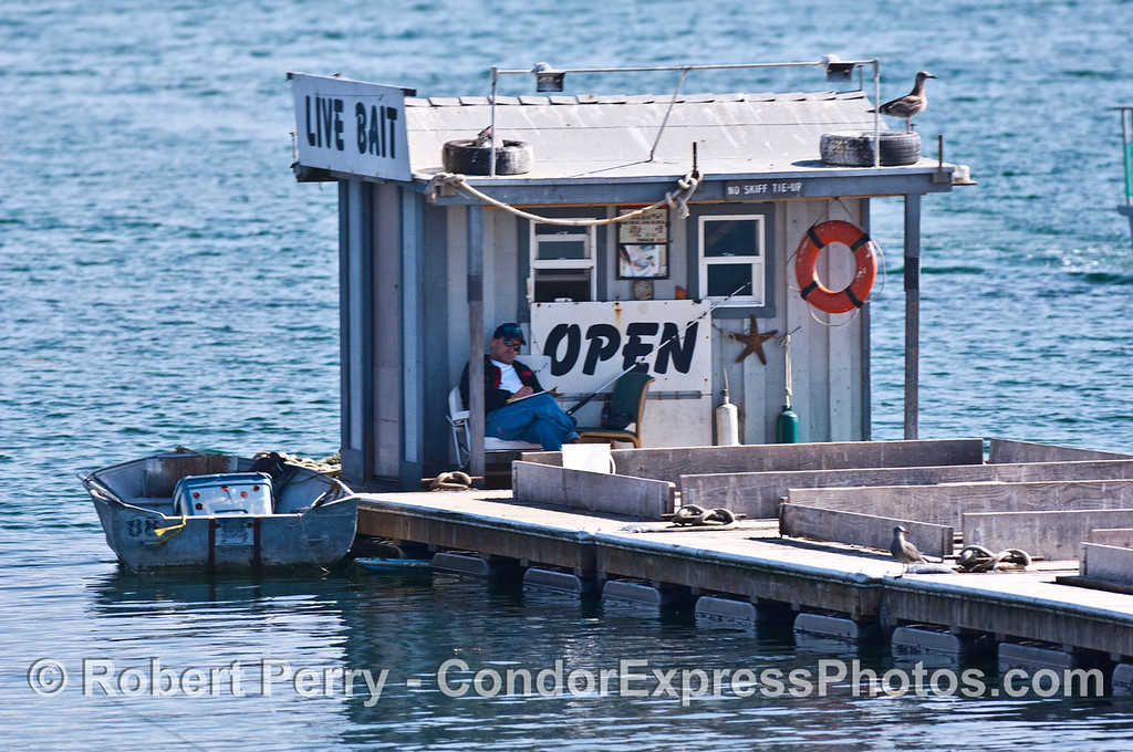 Shack on bait barge and bait sales person - Santa Barbara Harbor