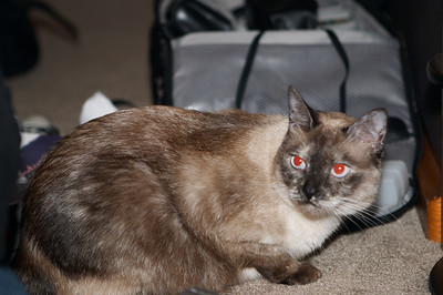 Mraw. Bella is evil
