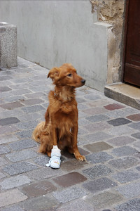 A lady told me her dog cut his leg on glass. Hopefully, he will be healed soon.