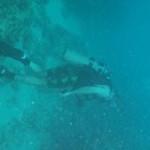2006 - April Rick Harris Dive Pics