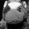 The Bedgemog's Headshot