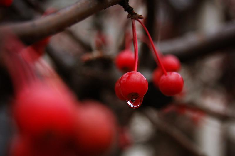 Waltz Droplet in Winter