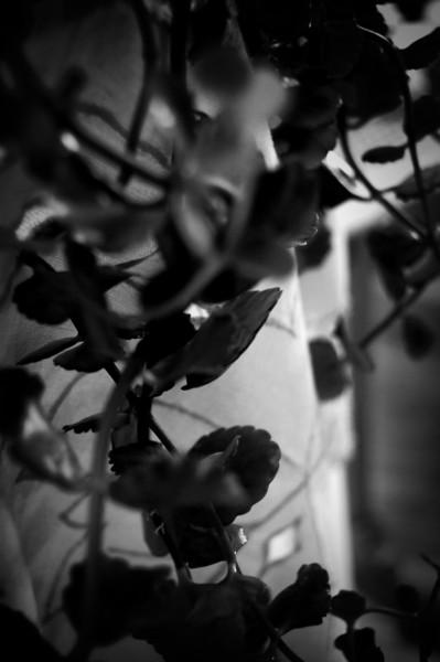 Plant Noir