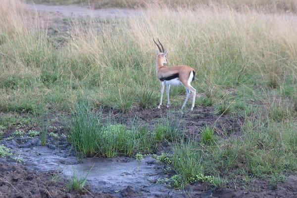 2006 Masai Mara 2