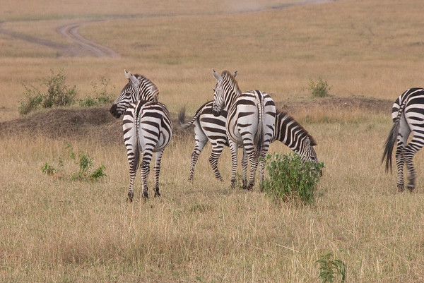 2006 Masai Mara