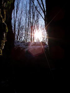 Sun Flare Through the Tree