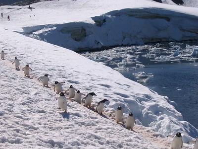 Penguin Highway - Andrew Gossen