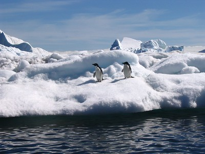 Penguins on iceberg - Andrew Gossen