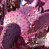 Don't pick the prickly pear by the paw