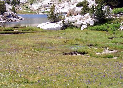 Sierra Summer Carpet