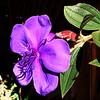 Tue 06-08-22 - Princess Flower