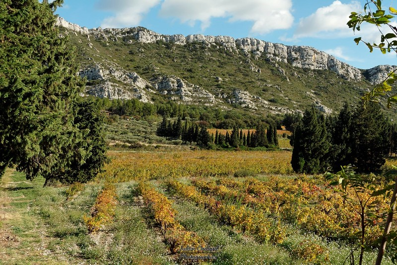 Aureille - Vallon des Glauges Vignoble