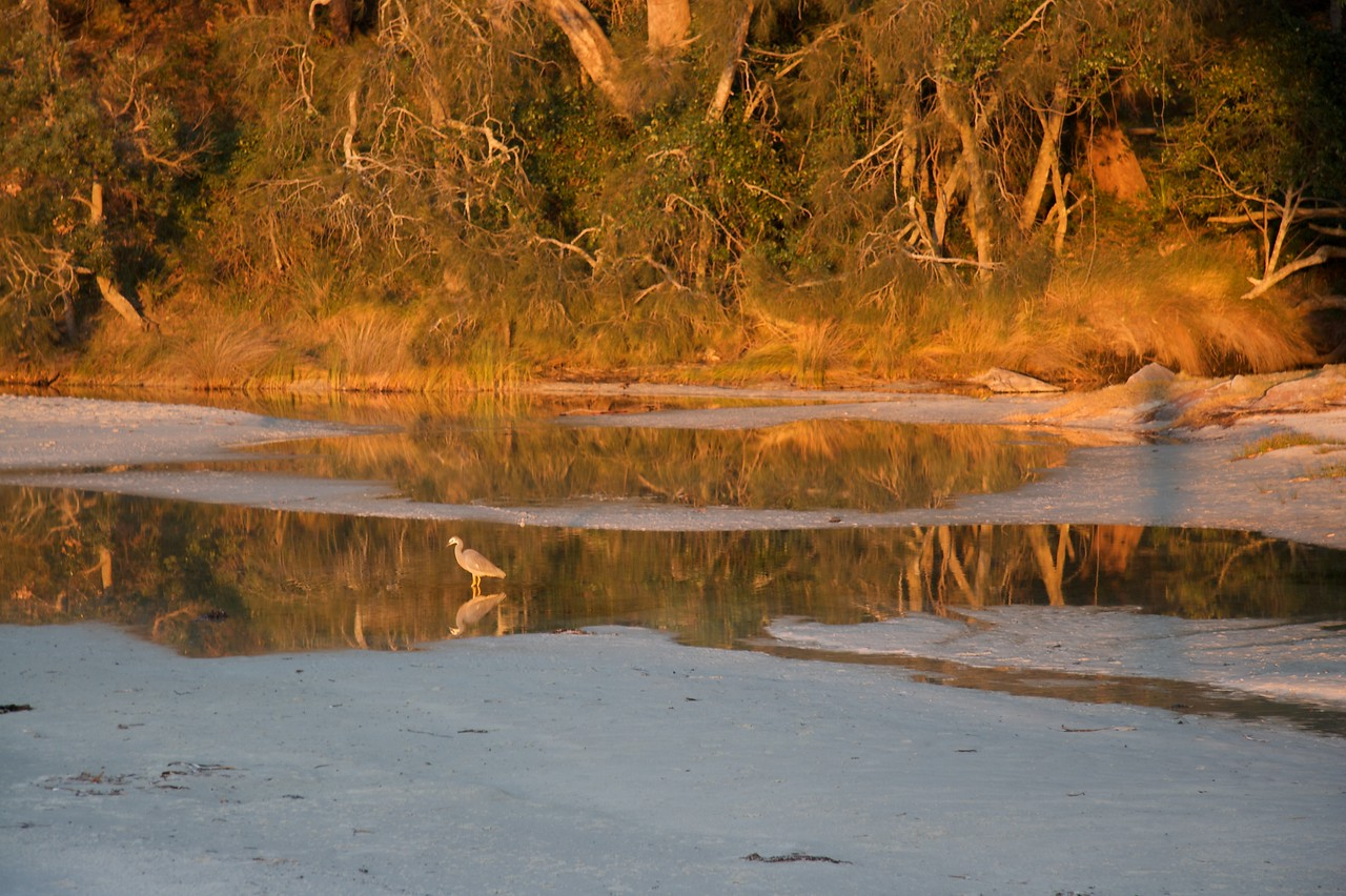 Bird on beach • A bird in a puddle on the beach at Jervis Bay during sunset.