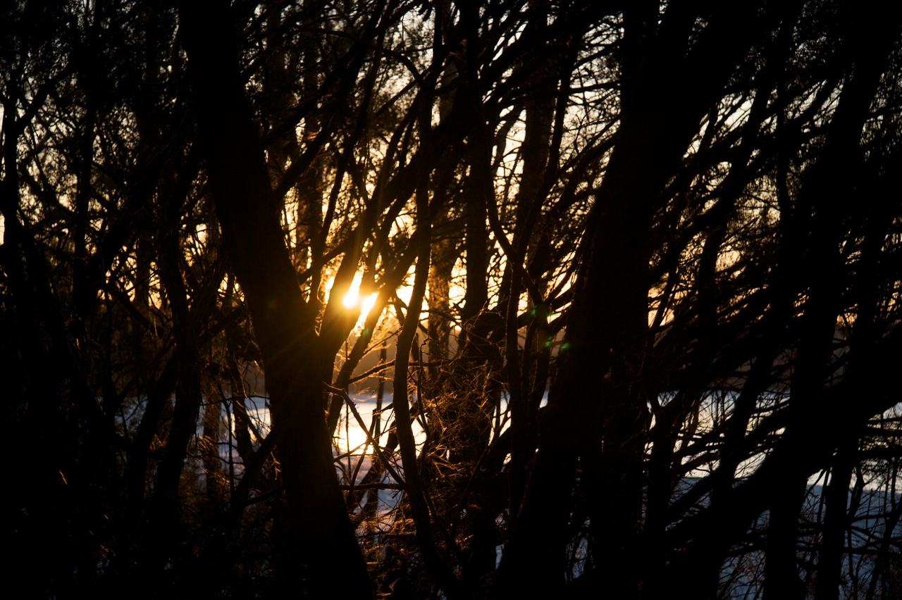 Sunset through the trees • Looking at the setting sun through the bare trees (it was winter) at Jervis Bay.