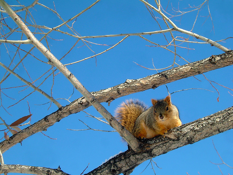 An interested spectator watches from a tree.