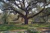 Brookgreen Gardens March 30,2006