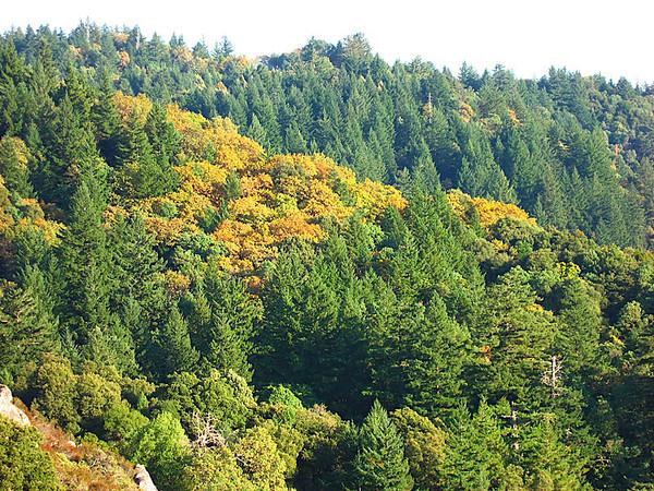 Looking at the Santa Cruz Mountains