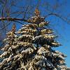 Dec 06 snowstorm 12