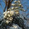 Dec 06 snowstorm 9