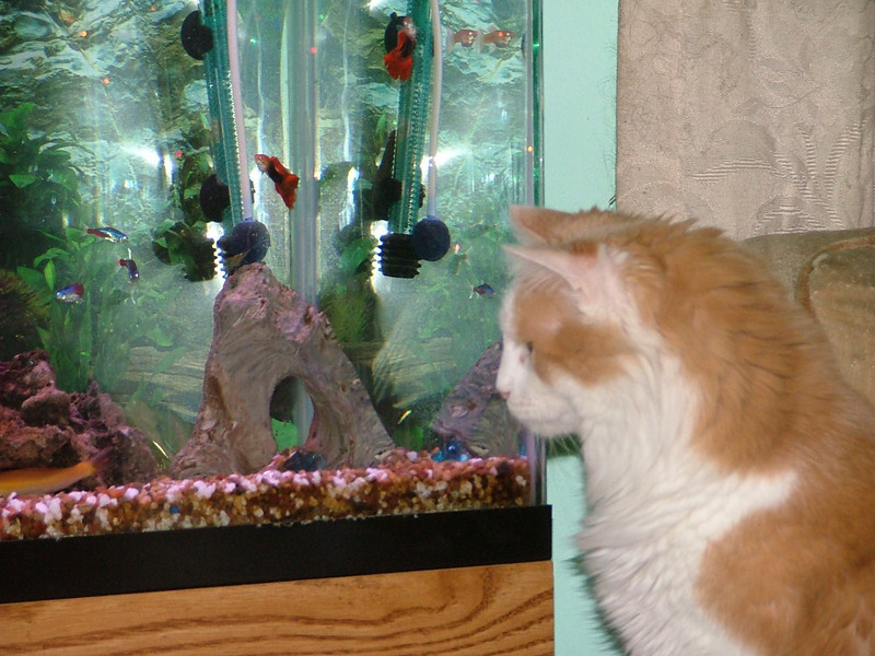 Beaux staring at the fish