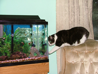 Esmer staring at the fish