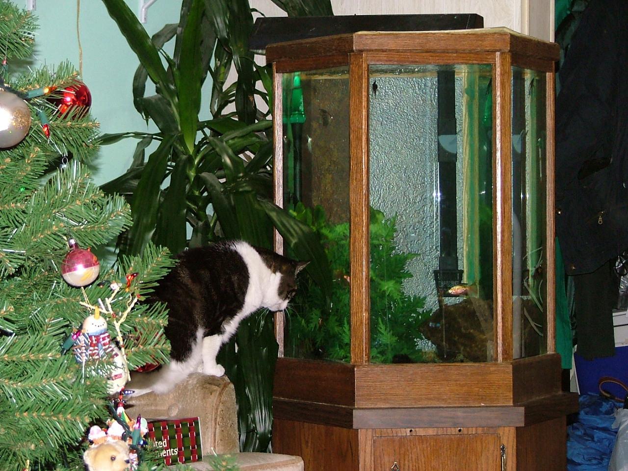 Esmer staring at the fish