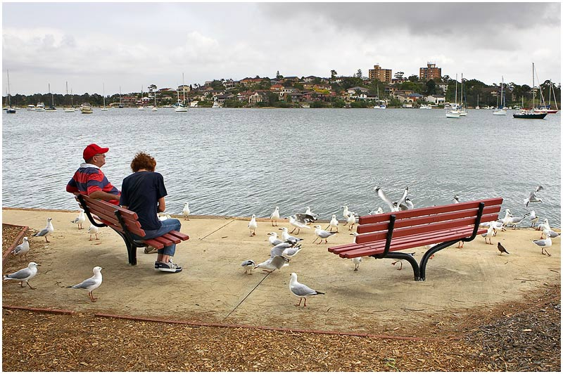 Taplin Park, Drummoyne, Wednesday December 13th 2006. <br /> <br /> This couple are trying to eat fish & chips with the seagulls looking for their share. <br /> <br /> <br /> EXIF DATA <br /> Canon 1D Mk II. EF 17-35mm f/2.8L@24mm 1/200s f/10 ISO 200.