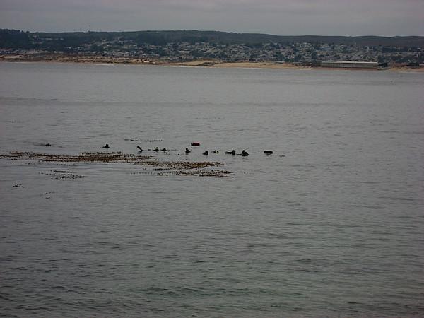 More divers in Breakwater Cove