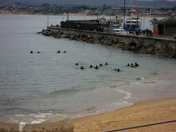 All the little divers in Breakwater Cove