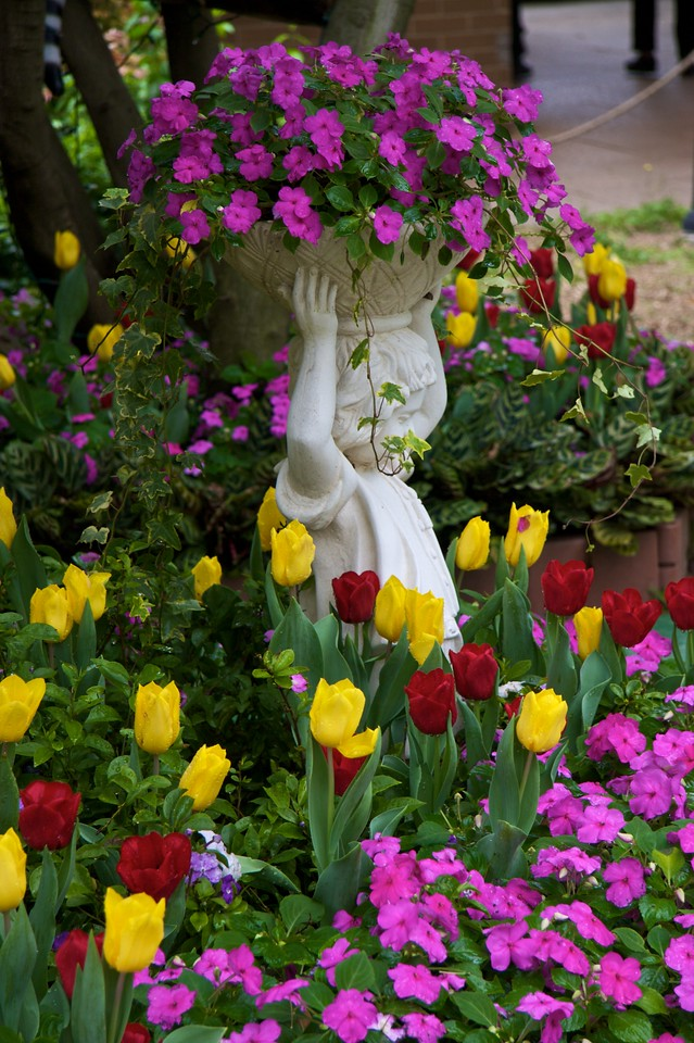 Tulips • A statue stands in the midst of red and yellow tulips in the Hong Kong Botanical and Zoological Gardens.