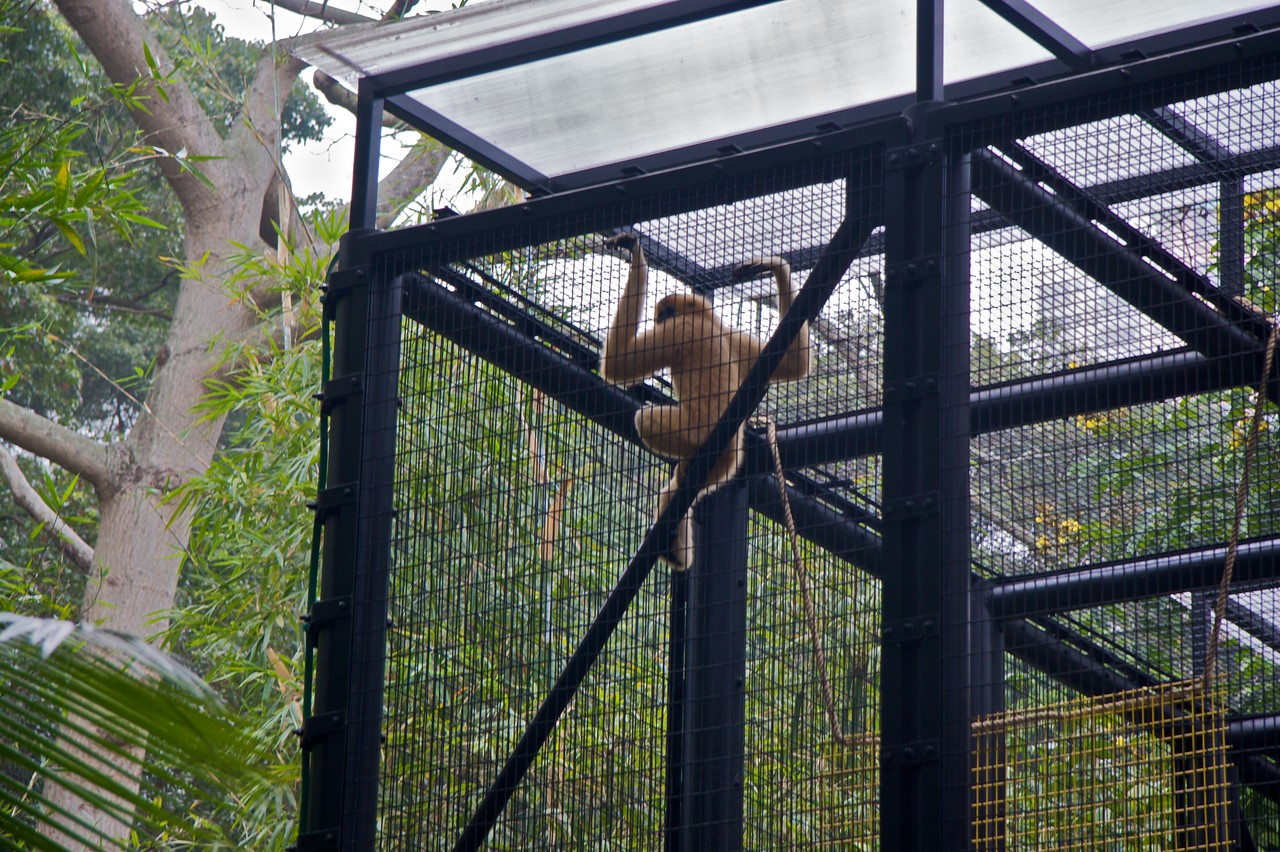 Monkey • A monkey in a cage at the Hong Kong Botanical and Zoological Garden.