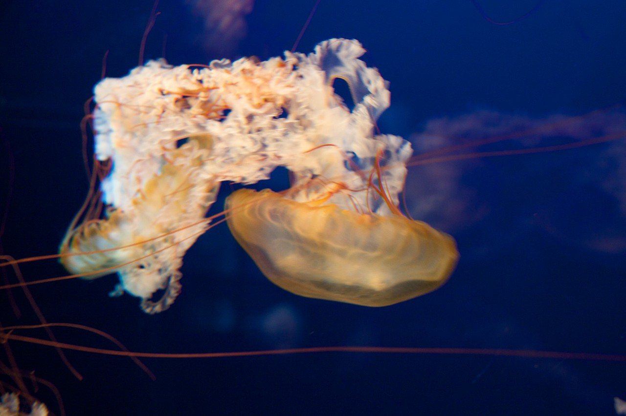 Jellyfish • At the Osaka Aquarium. Aren't jellyfish pretty ugly, but strangely fascinating? Powerful sting, apparently.