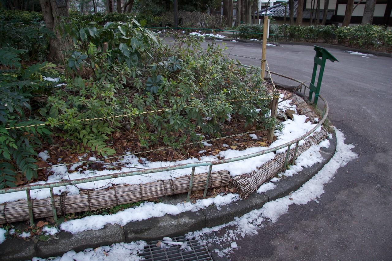 Remnants of Tokyo's snow • When I was in Tokyo for two days most of the snow (about which I'd heard much prior to my arrival in Japan) had already melted; however in some shady places, such as at the edge of this path in Shinjuku Chūō Kōen park there remained a few traces of the snow.