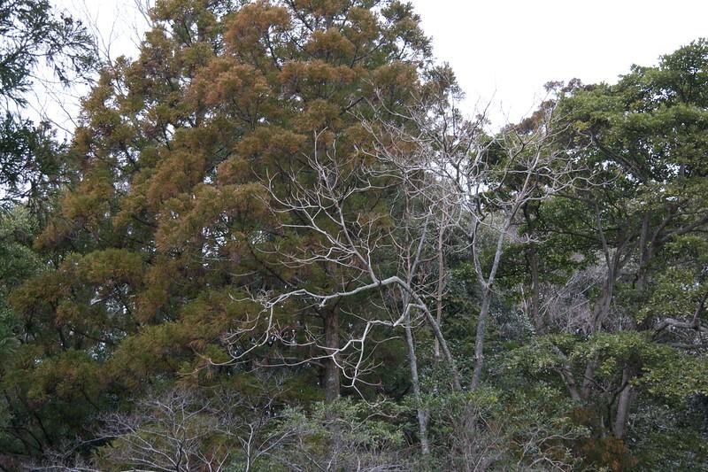 Trees at the Naiku