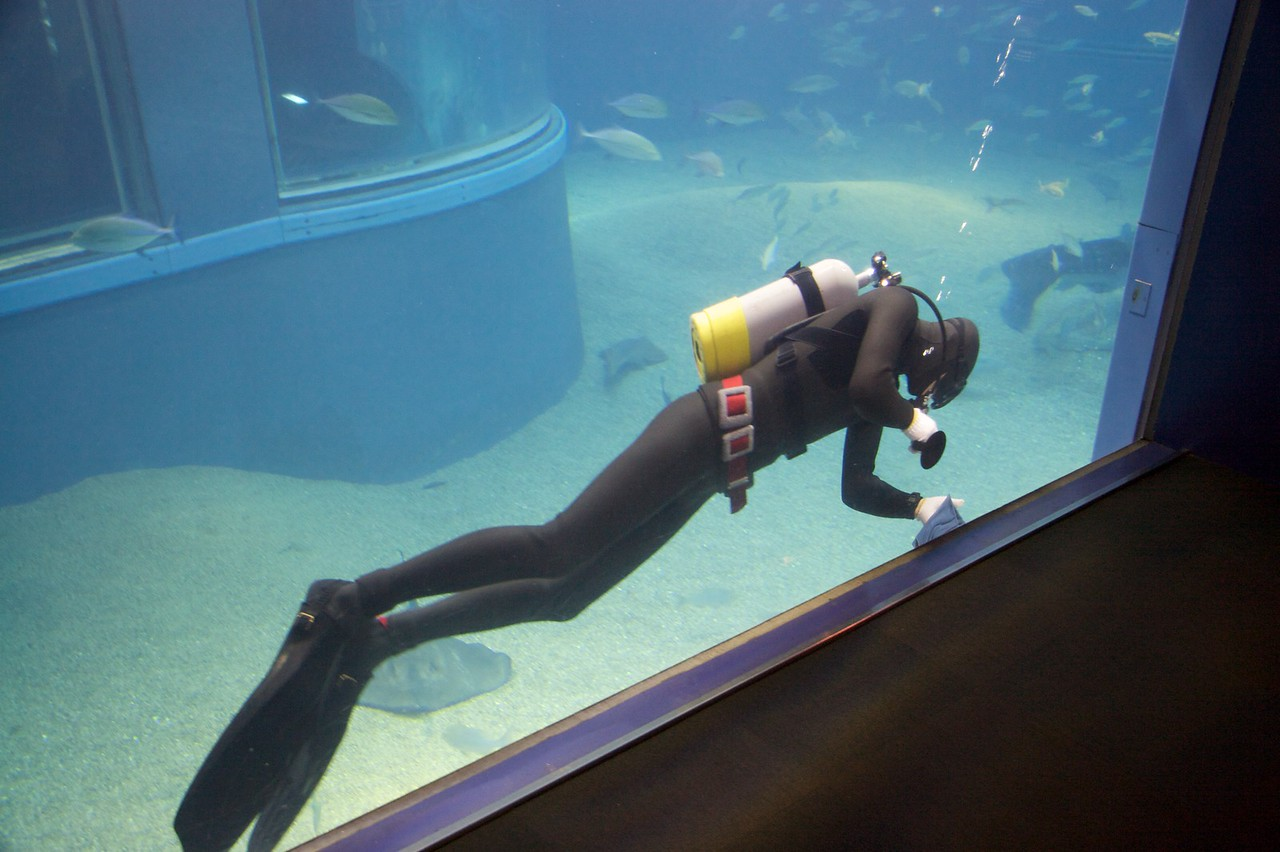 Cleaning the glass • A diver carefully wipes the glass at the Osaka Aquarium. When I walked around, I realised that the glass was mirrored on the inside, so he (probably) couldn't see me taking this photo. That presumably also means that the fish aren't too disturbed by the antics of the aquarium visitors.