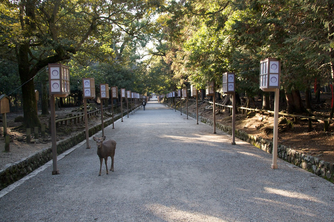 Deer in portrait pose • A deer stands as if expecting to be photographed along the path from the botanical garden back to the centre of Nara.
