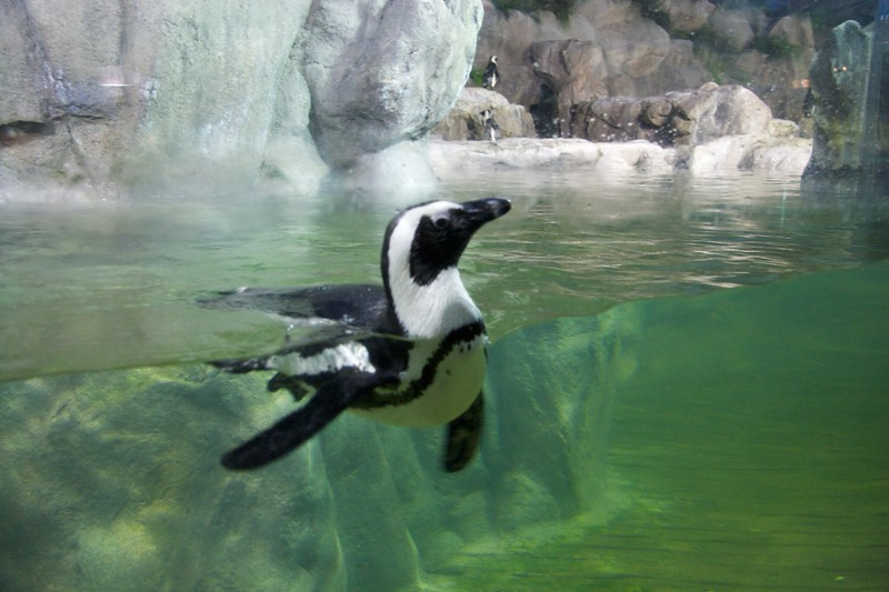 Penguin • At Busan aquarium.
