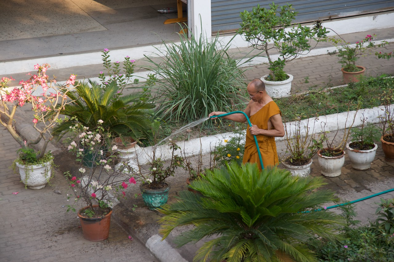 Gardening • A monk waters his plants at Wat Bupparam in Chiang Mai.