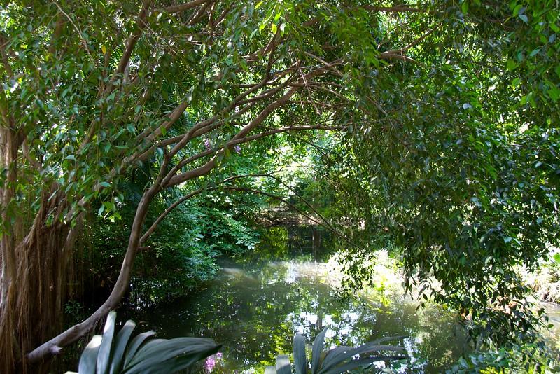 Trees • Trees at Jim Thompson's House in Bangkok.