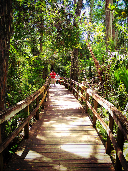 The Forest of the Everglades