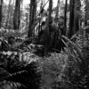 Ochopee Trail, After Butcher