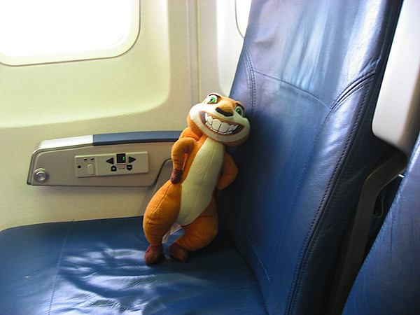 Hammy on the plane