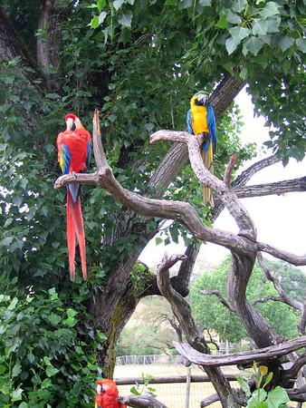 Holiday at Safari West