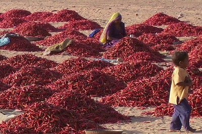 Drying chilis on the road from Jodhpur to Osian - Amy Garawitz