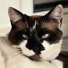Fri 06-07-20 - Winery Cat