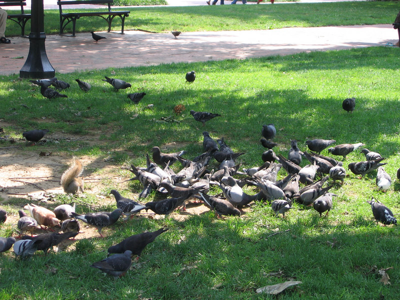 The squirrels and birds are WELL FEED at the white house.